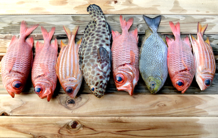 aring: mix fresh Pinecone soldier fish and grouper fish  trevally fish for cooking from asian fishery market photo in daylight time show big eyes and pink scales