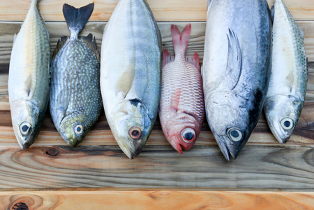 thunnus: mix fresh indian mackerel fishes and other fishes for cooking from asian fishery market Stock Photo