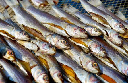 food preservation: dry mullet fish in sunlight for sale at the fishery market and the one kind of food preservation for seafood Stock Photo