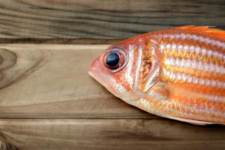 soldier fish: haft of Sargocentron rubrum on wood in dark sunlight