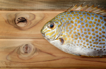 rabbitfish: Fresh Siganus guttatus fish from fishery market for cooking its good kind of seafood photo in outdoor sunlight Stock Photo