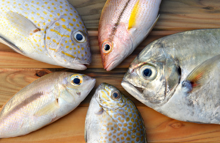 fishery: mix fresh fishes from fishery market on wooden plate in sunlight time