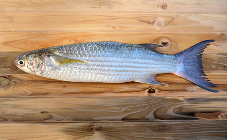 scaled: fresh diamond scaled grey mullet fish on wooden plate in sunlight