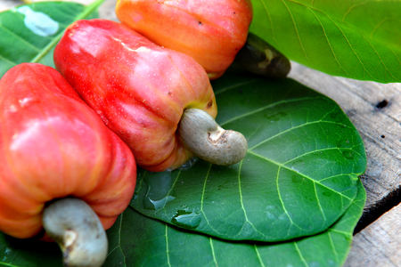 single tree: fresh old cashew nut fruit in tropical country outdoor dark and shadow sun light day time
