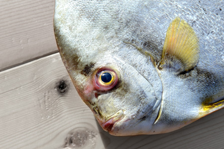 fishery: Fresh Round Batfish from fishery market in outdoor sunlight and space for text Stock Photo
