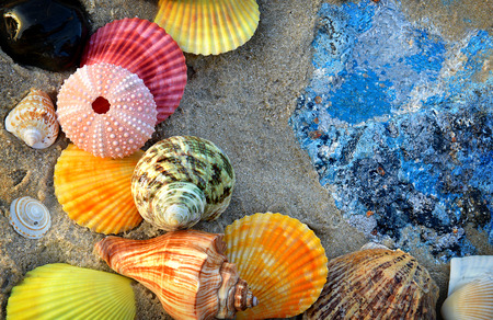 side lighting: Mixing colorful of shell fish on the beach whit space for text in sunset lighting one side low light and dark shadow Stock Photo