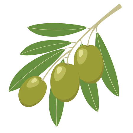 Green olives with green leaves. Vector illustration.