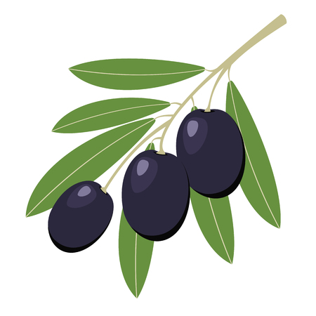 black and white: Dark olives with green leaves. Vector illustration.