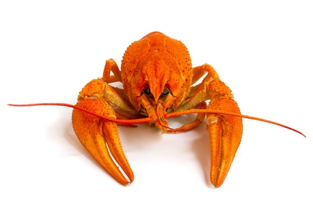 Boiled crawfish is isolated on a white background Stock Photo - 12290242
