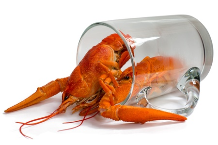 Boiled crayfish in a beer mug, isolated on a white background  Stock Photo