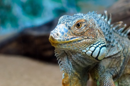 Beautiful reptile, close-up  Stock Photo - 12842361