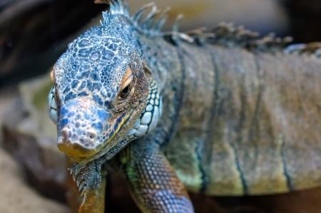 Beautiful reptile, close-up                        Stock Photo - 12842357