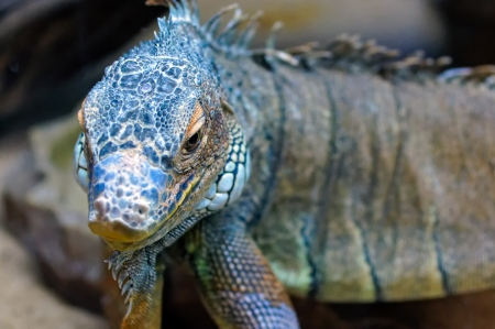 Beautiful reptile, close-up