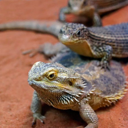 The family of reptiles in the sand. Stock Photo - 13568195