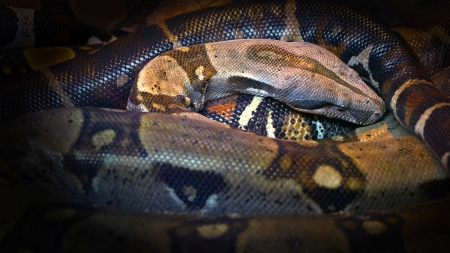 Snake in the group of fellow Stock Photo - 15179168