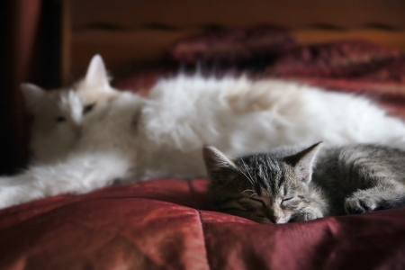 Kitten sleeping under the protection of his mother Stock Photo - 16053357