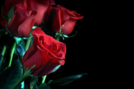 Bouquet of red roses on a black background                     Stock Photo - 17962007