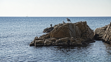 Seagulls rest on the sea cliff
