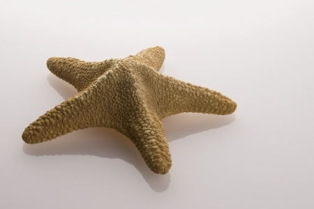 Starfish lying on a reflective surface