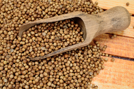 culantro: semillas de cilantro en mesa de madera