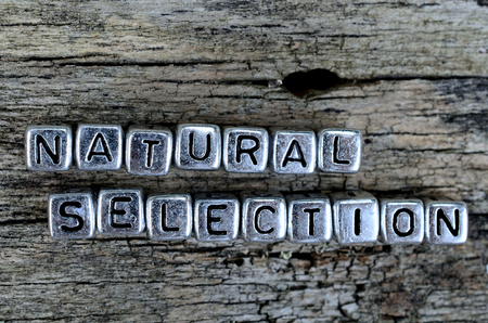 natural selection: silver cube word natural selection on wooden table