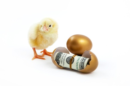 hatched: cash hatched from eggs and chicken is golden