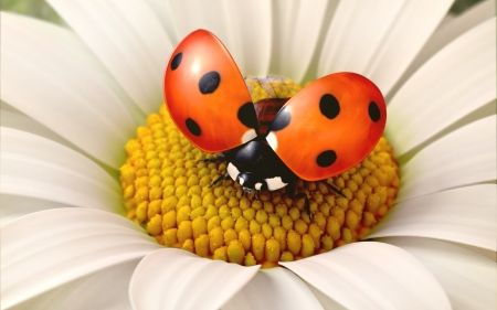 Daisy flower with a ladybird, 3d render photo