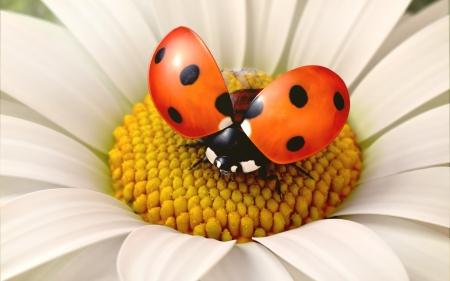 Daisy flower with a ladybird, 3d render