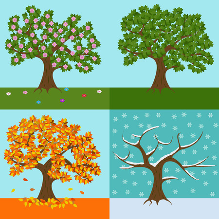 Tree in four yearly seasons, spring, summer, fall and winter vector illustration