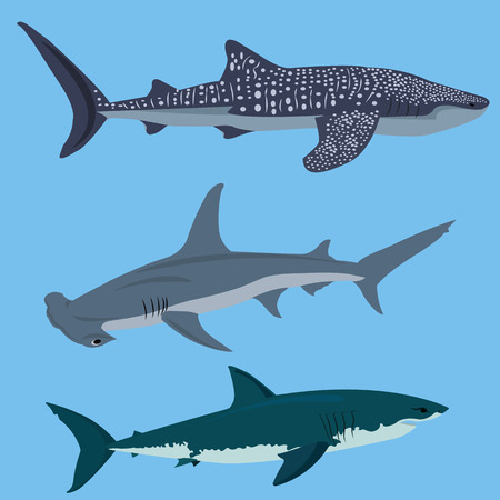 scavenging: Collection of sharks vector  illustration