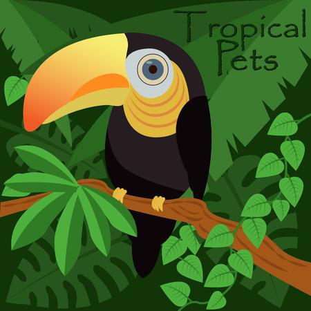 Toucan bird in a jungle, tropical pets vector illustration Illusztráció