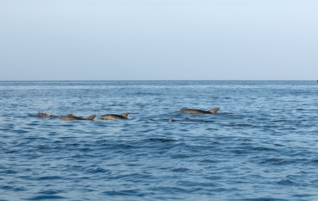 bounding: Dolphins in Indian ocean near Africa