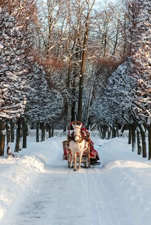 Winter holiday-walk in carriage with white horse Stock Photo