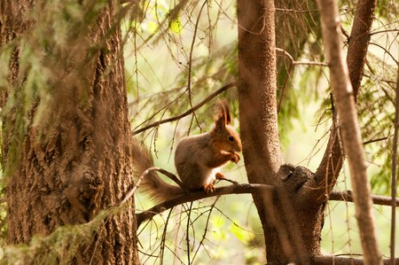 Little squirrel eating nut in park at spring photo
