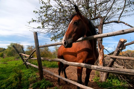 A beautiful brown horse in a paddock Stock Photo