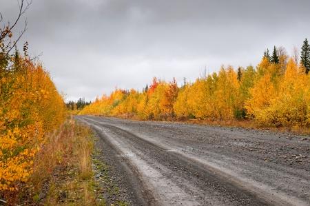 Wild mountain road in deep taiga forest, Komi region, Russia. photo
