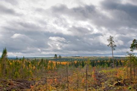 boreal: Taiga (boreal forest) in Komi region, northern Russia. Stock Photo