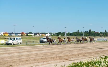 blinders: Germany, Berlin - JUNE 07: Harness Racing on Karlshorst racetrack in Berlin, Germany on June 07,2014.