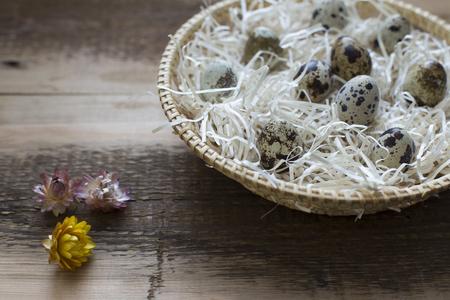 quail: Huevos de codorniz orgánicos Foto de archivo