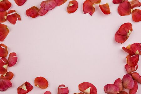 Bright red petals of a ranunculus on a pink background in the form of a frame