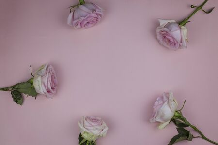 Roses on a pink background with space for text.