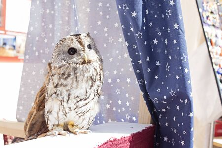 Little beautiful owl sits in a starry tent Stok Fotoğraf