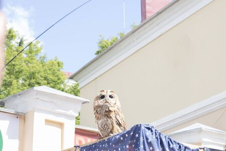 Little owl with big eyes sits in the city among the buildings Stok Fotoğraf