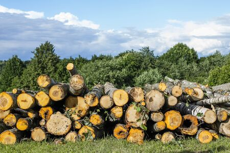 Logs lying on the grass. Wood heating concept