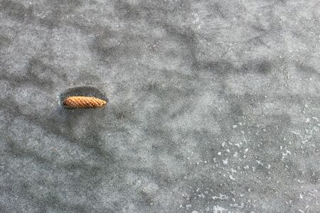 Frozen fir cone in ice. The concept of beauty of nature
