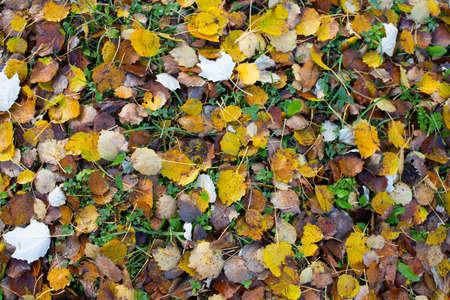 Bright autumn foliage on the ground. Quiet and beautiful autumn