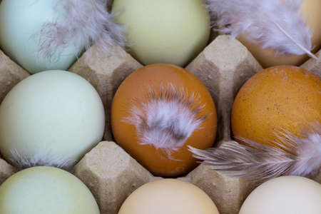 Close up view of raw multicolored chicken eggs with feathers
