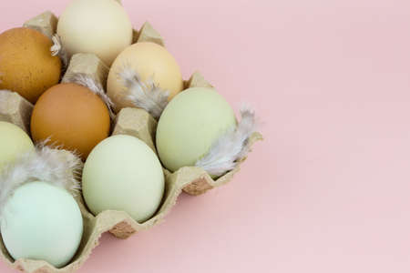 Multicolored chicken eggs with feathers on a pink background