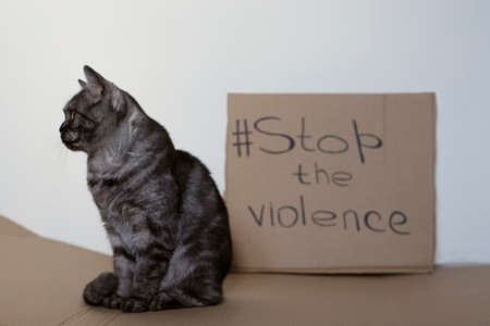 Cat on the background of the inscription asking to stop the violence. A sign calling to stop violence against those who cannot protect themselves