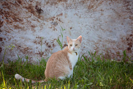 The domestic cat is lost. The cat ran away from home and sits on the street.